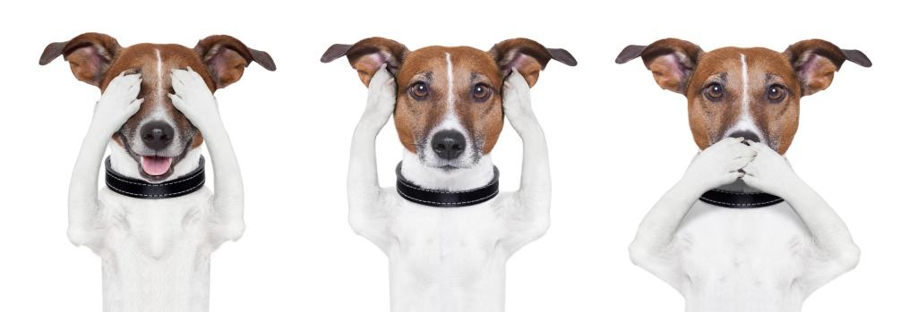 3 weiß-braune Jack Russel Terrier sind nebeneinander aufgereiht. Der linke hält sich mit seinen Pfoten die Augen zu, der in der Mitte die Ohren und der Rechte hält sich seine Schnauze zu.